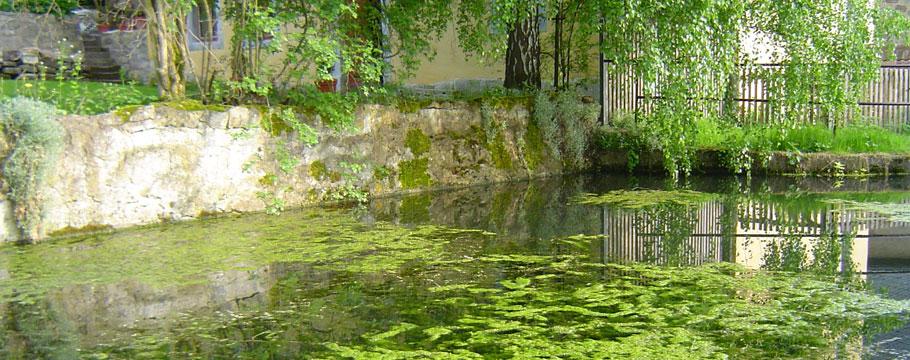 Teich in Saalborn